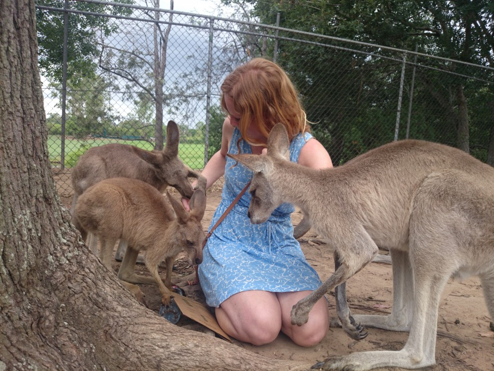 Die Känguruhs waren sehr zutraulich.