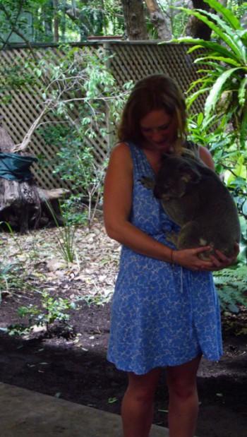 Im Koala-Glück