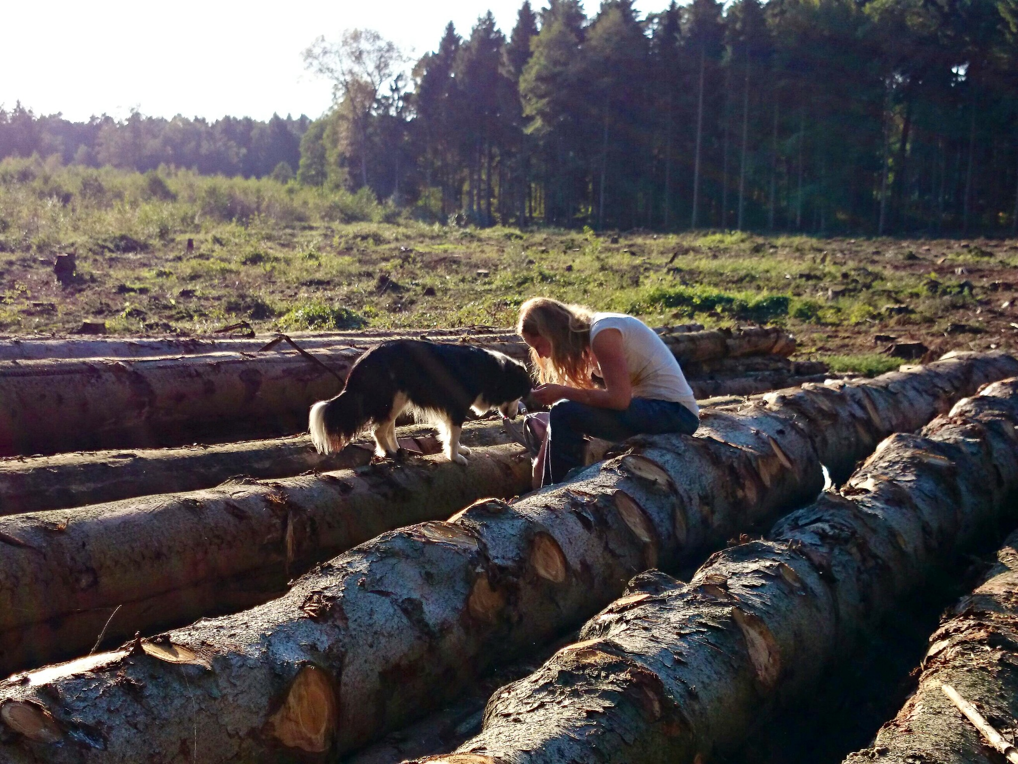 Waldstimmung_mit_Hund