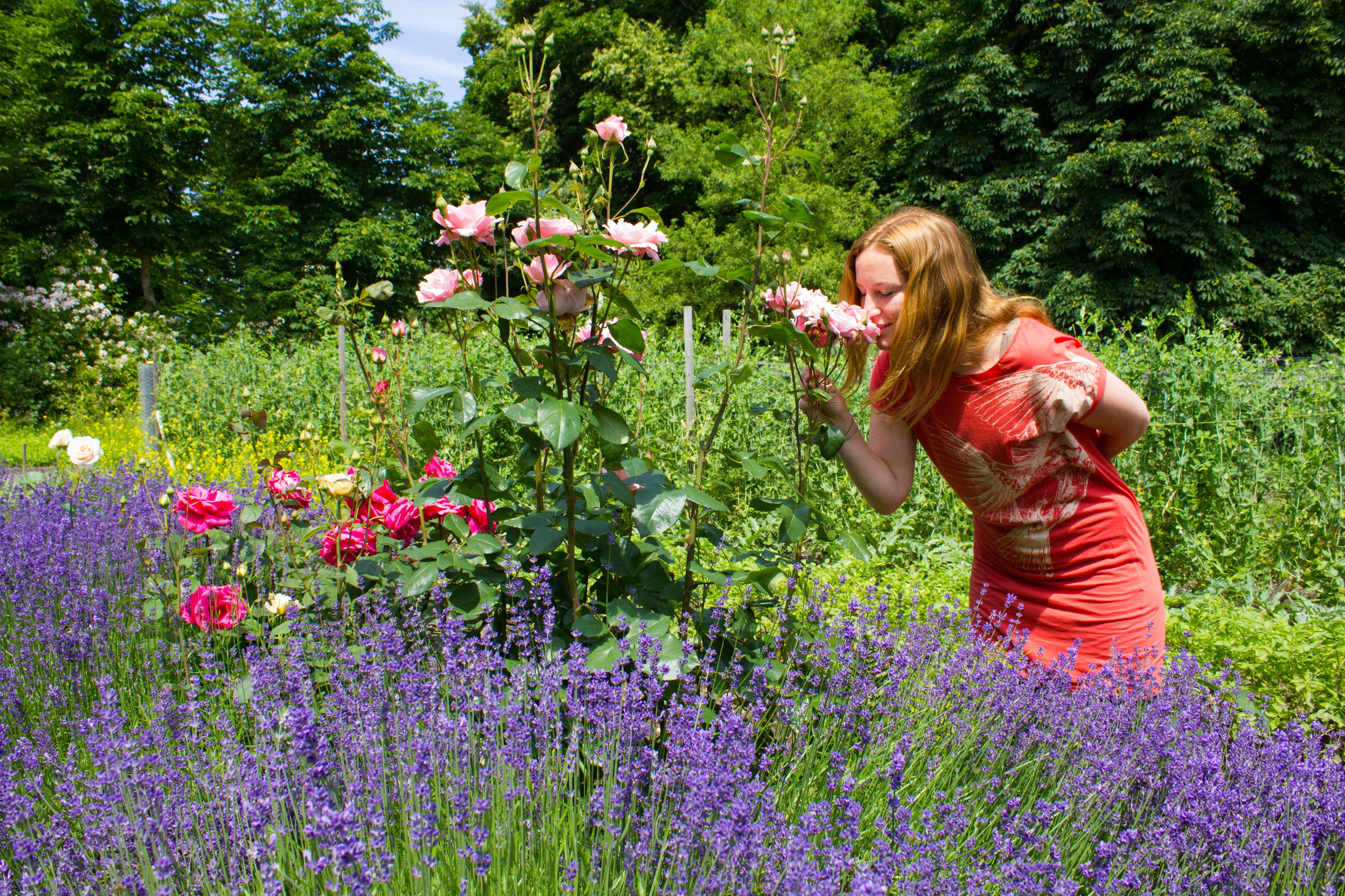 Rosenduft im Paradiesgarten